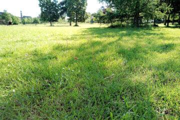 Grasveld geschikt om op hard te lopen.